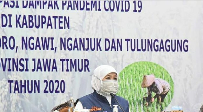 Gubernur Jawa Timur, Khofifah Indar Parawansa minta enam kabupaten di Jatim tanam padi